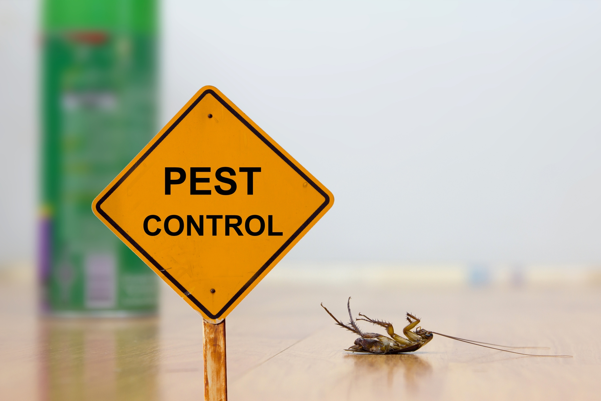 24 Hour Pest Control, Pest Control in Richmond Hill, Richmond Park, TW10. Call Now 020 8166 9746